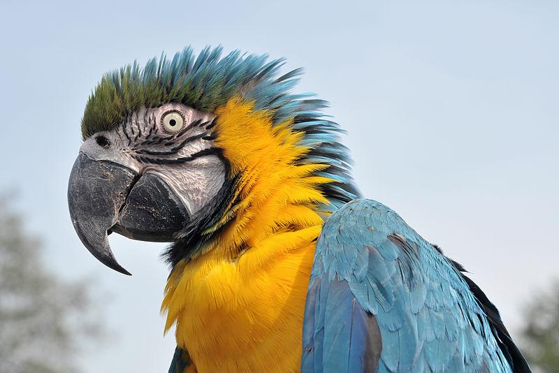 Смешные попугаи ара