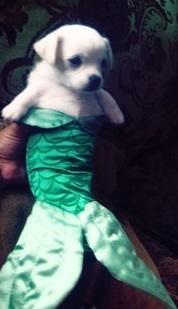 фото собака русалка