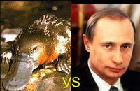 Утконос и Путин.JPG