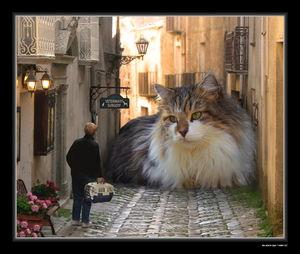 Фраза кота за хвост